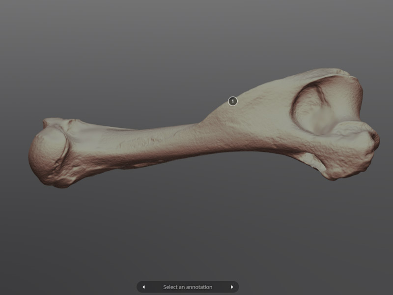 3D Scanning for Cultural Heritage - Polyga
