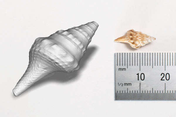 HDI C504 scanning of a sea shell